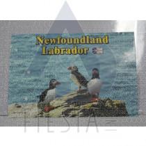 NEWFOUNDLAND LABRADOR POSTCARD PUFFIN