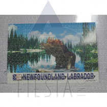 NEWFOUNDLAND LABRADOR POSTCARD MOOSE IN WATER