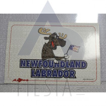 NEWFOUNDLAND LABRADOR POSTCARD HAPPY MOOSE