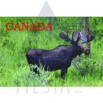 CANADA POSTCARD THE CANADIAN MOOSE
