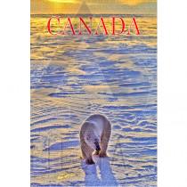 CANADA POSTCARD POLAR BEAR